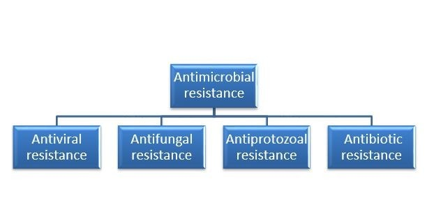 Types of Antimicrobial Resistance