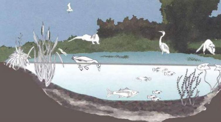 Wetland Is a Source of Substantial Biodiversity