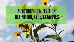 Autotrophic Nutrition_ Definition, Type, Examples