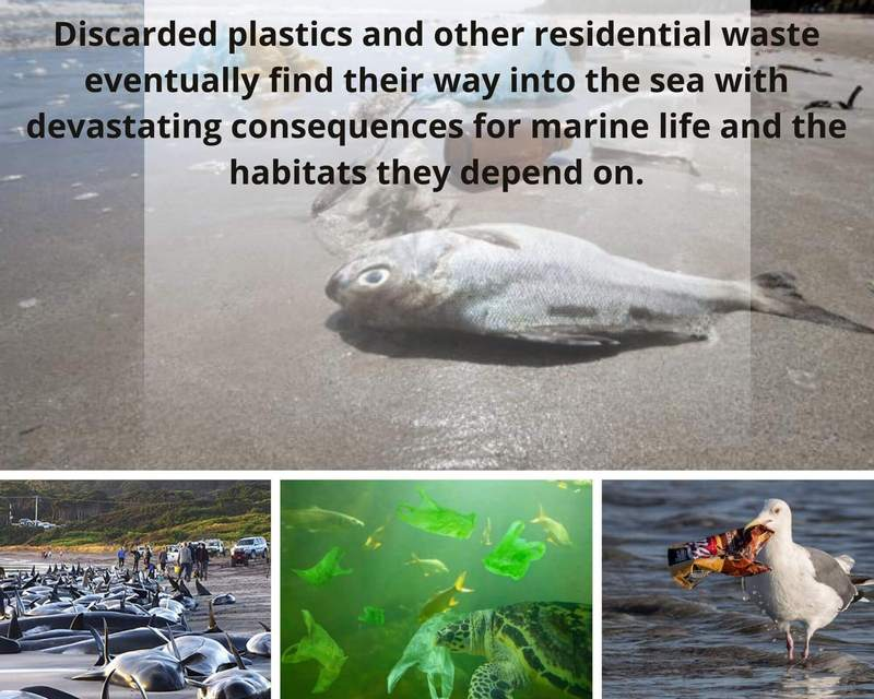 Plastic Pollution Impact on Marine life: Avoid Plastic and Save Environment