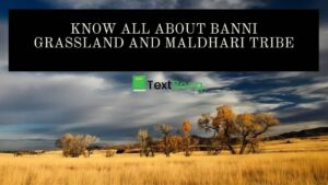 Know All About Banni Grassland and Maldhari Tribe